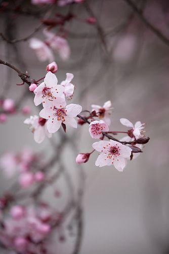 Untitled Flowers Photography Sakura Flower Pretty Flowers