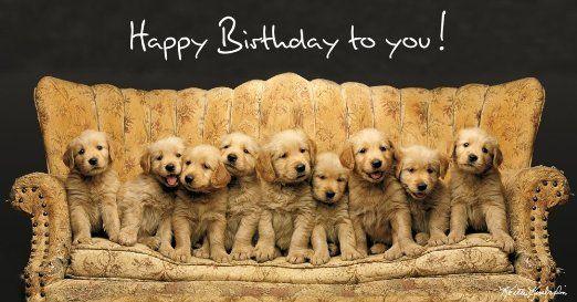 Golden Retriever Happy Birthday Golden Retriever Puppy Couch