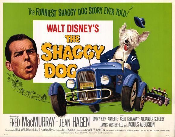 The shaggy dog – Disney | Dog movies, Disney movies, Walt disney ...