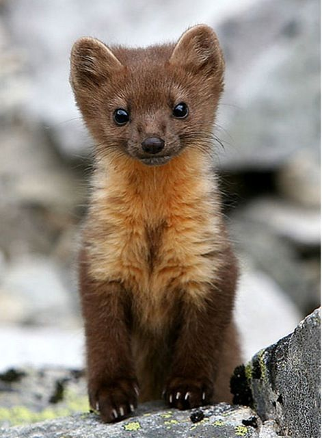 Who knew baby martens could be so cute!