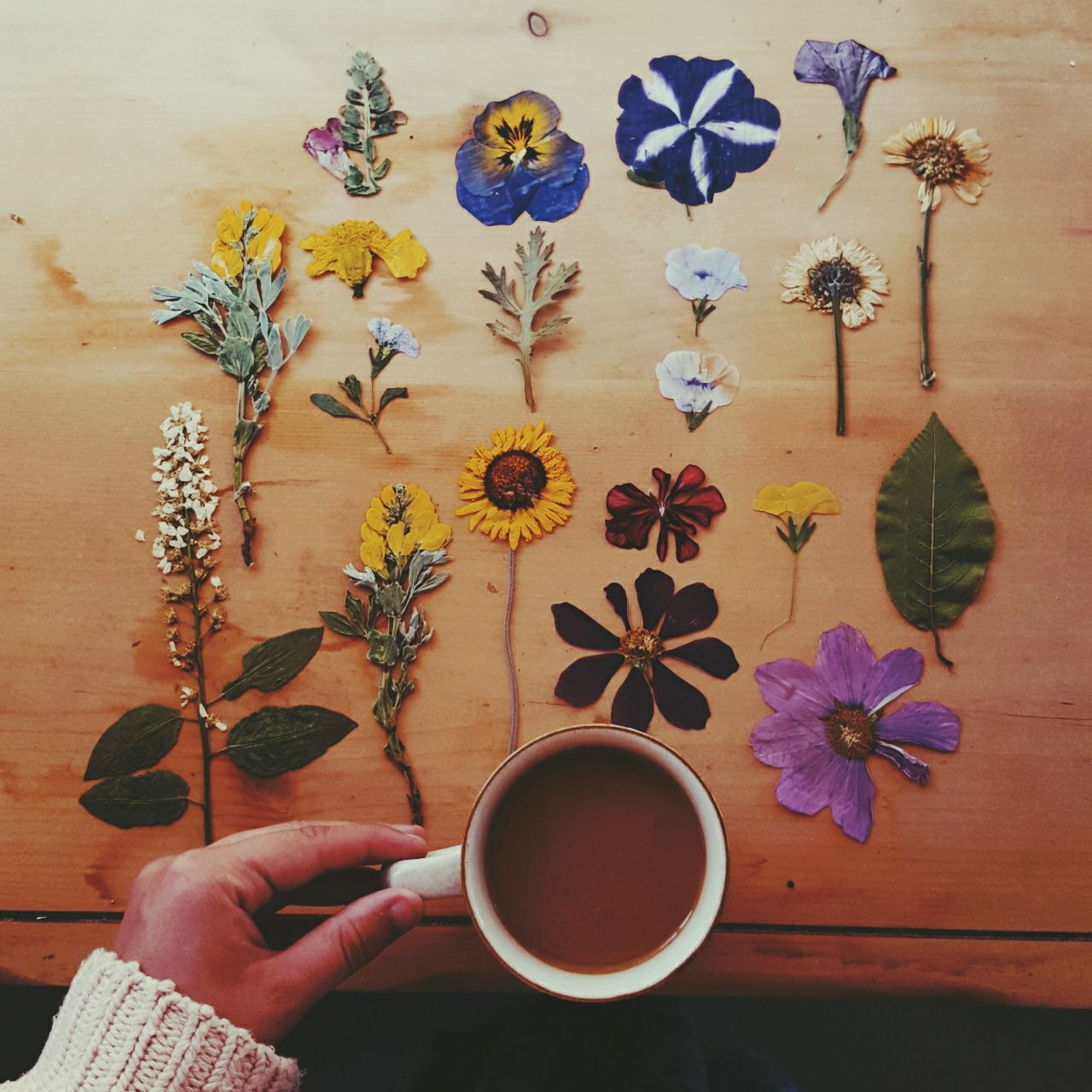 Uncategorized How To Make Pressed Flowers pressed flowers and coffee life make pinterest coffee
