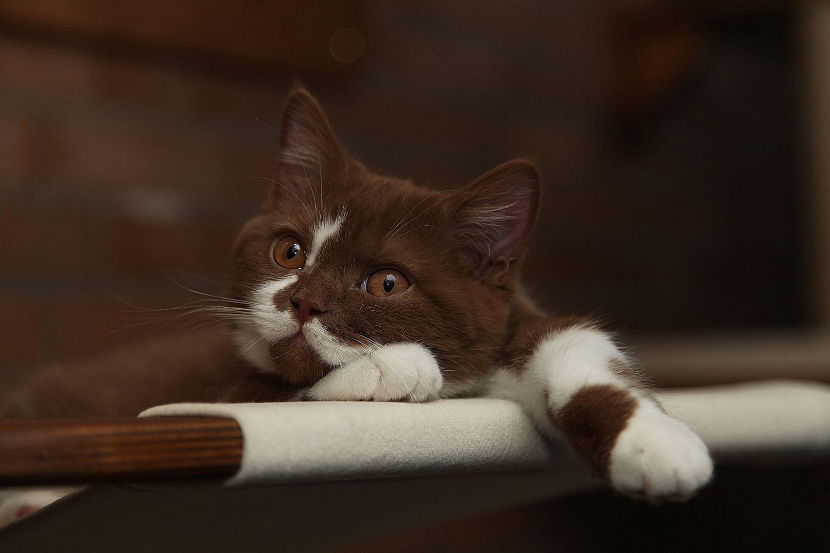 ***Mach watt*** | Lustige katzenbilder, Katzen draußen ...