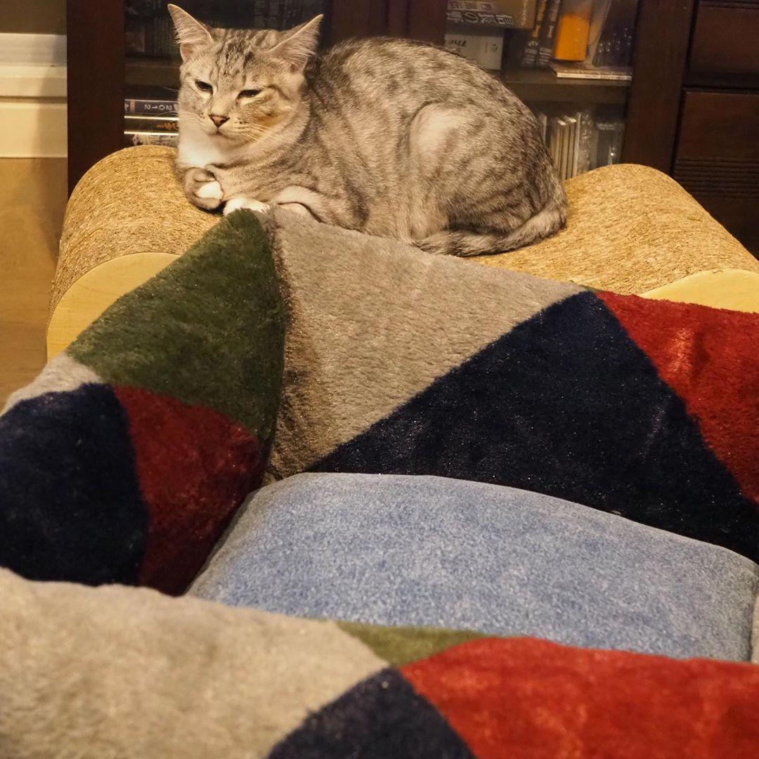 とらねこ キジトラ サバトラ 保護猫 フェリシモ猫部 ペコねこ部 Pecobox Sippo 朝ワンコ夕ニャンコ ねこちゃんホンポ サンディ Jalペットファミリー ビューティープロコンテスト Ipet 今日のうちの子 Limiaペット同好会 Sippo写真展に参加したい にゃんと素敵なひと