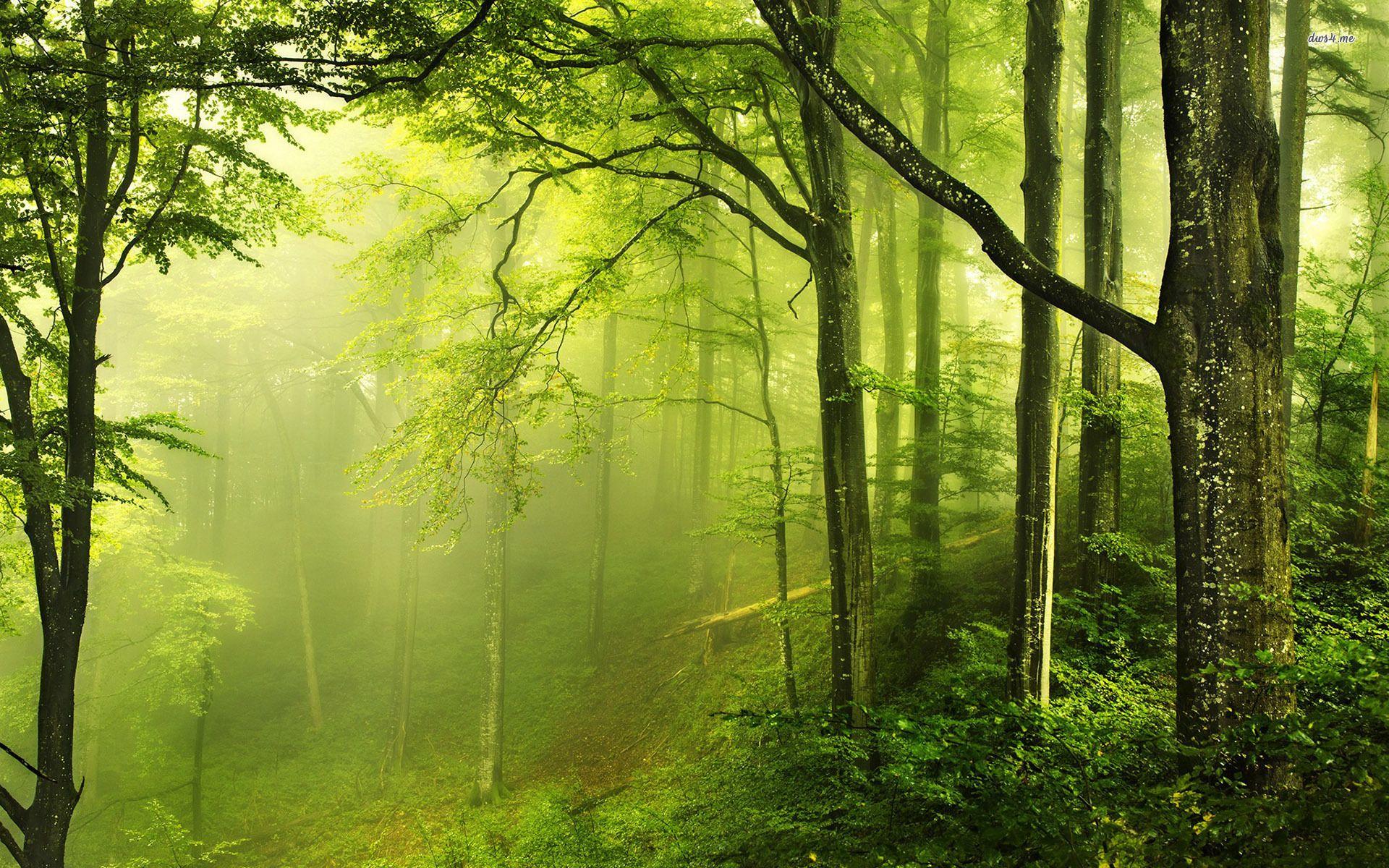 Beautiful Green Forest Hd Desktop Wallpaper Instagram Photo Background Image Forest Wallpaper Beautiful Forest Landscape Trees