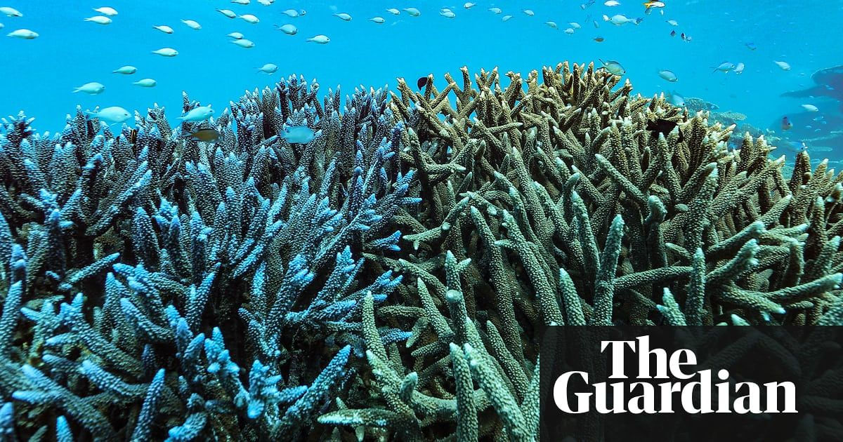 Can You Spot Dead Coral In Pictures Great Barrier Reef