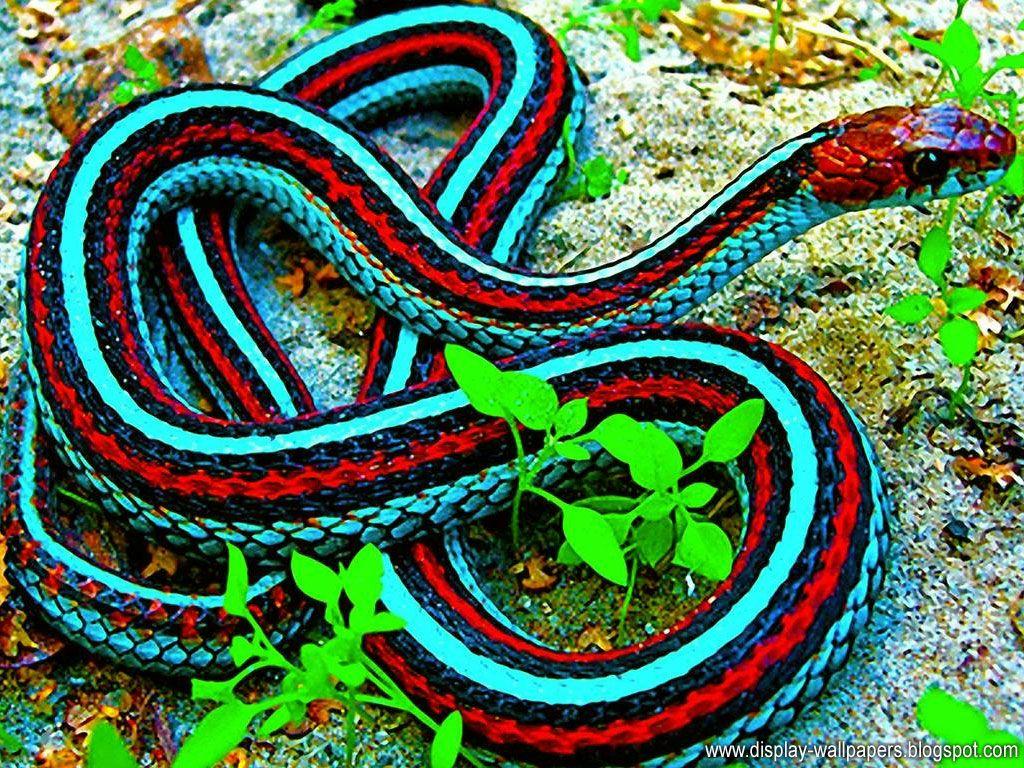 Best Cobra snake ideas on Pinterest King cobra Scary
