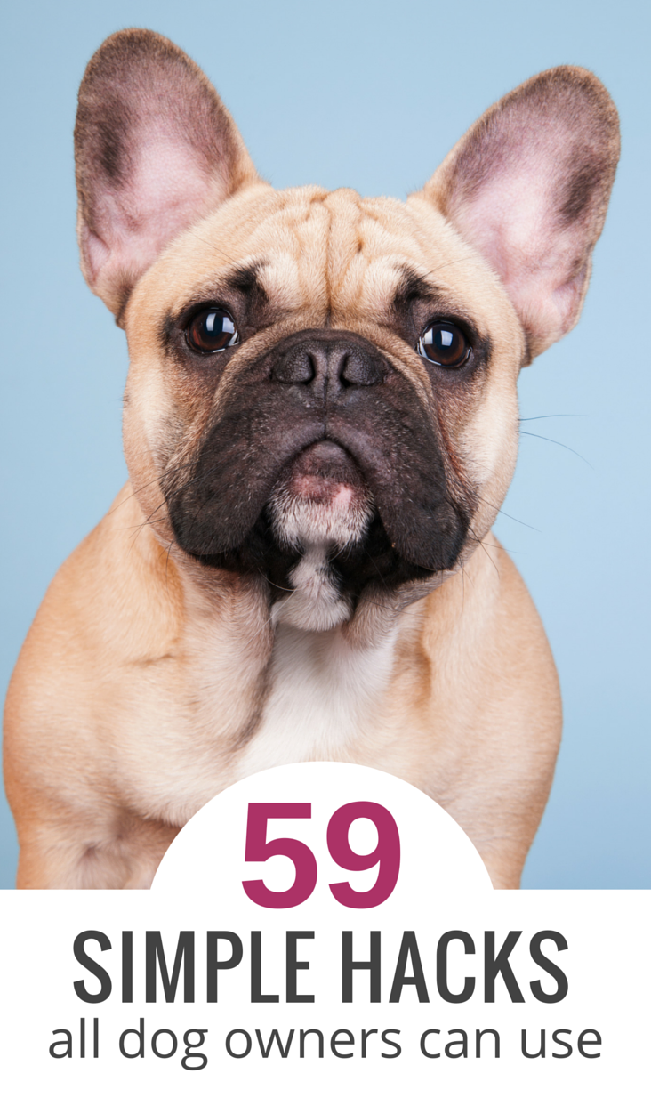 59 Simple Life Hacks For Dog Owners Dog Owners Dog Life Hacks Dogs
