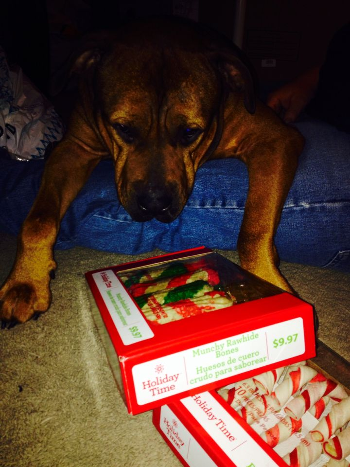 Brutus wants his present early❤️