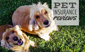 Pet Insurance Reviews 2020 Cost & Coverage Comparisons in