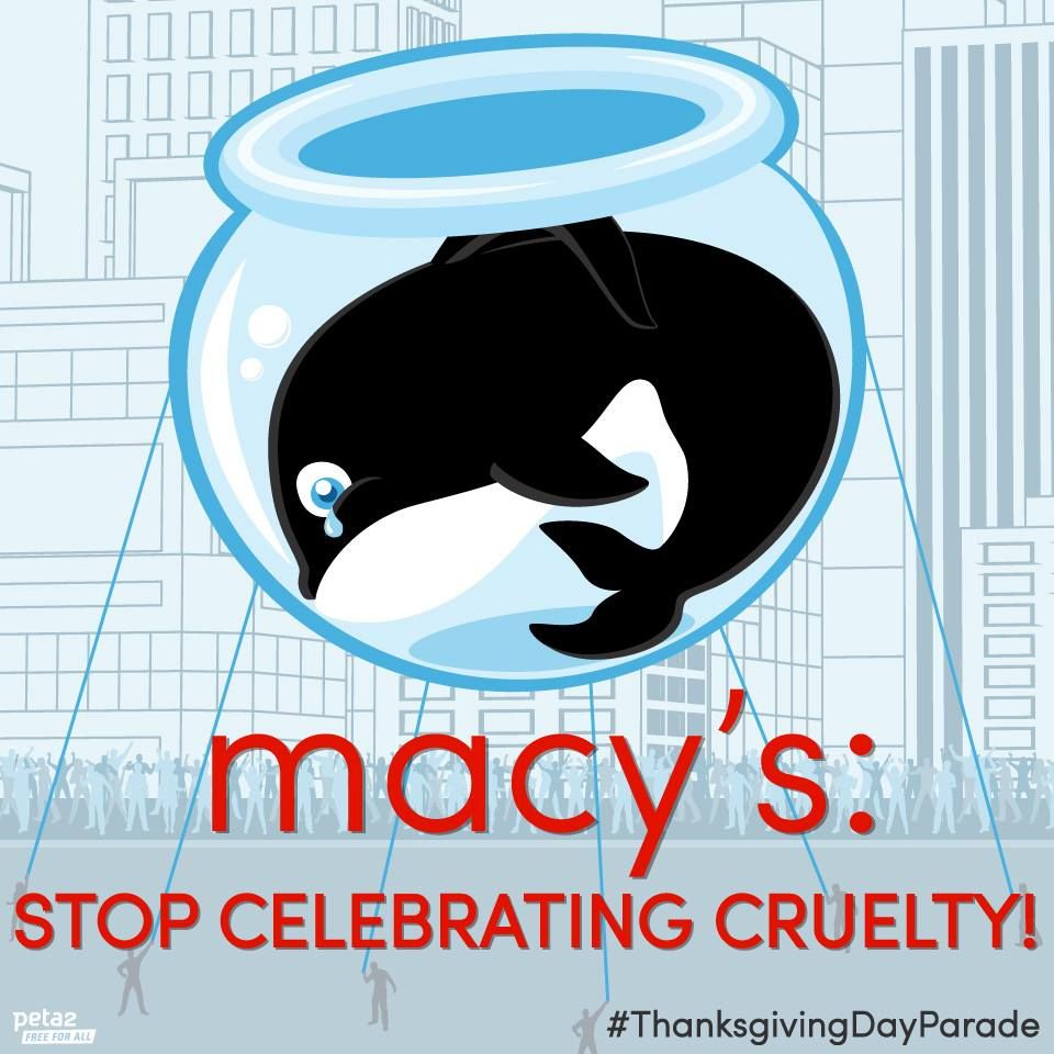Stop Celebrating Cruelty With Images Thanksgiving Day Parade Macys Parade Sea World