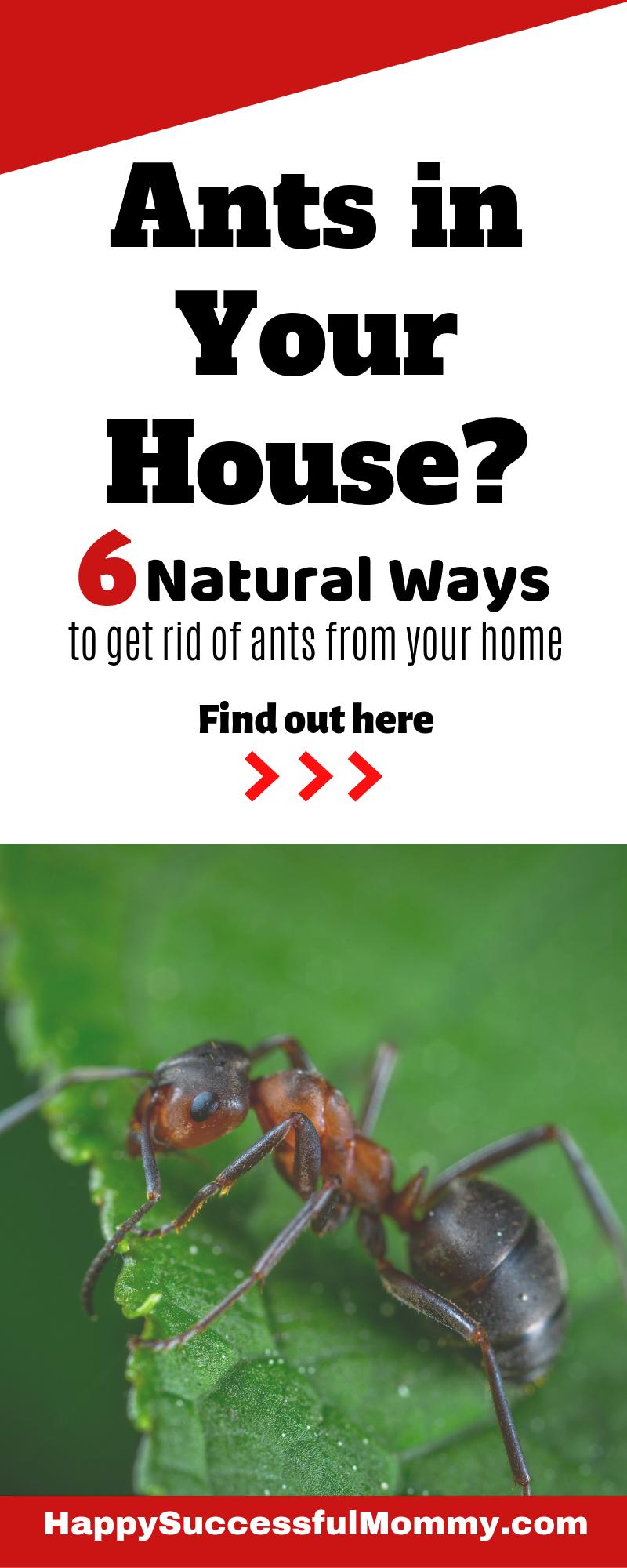 Need To Get Rid Of Ants Get Rid Of Ants Rid Of Ants Ant Remedies