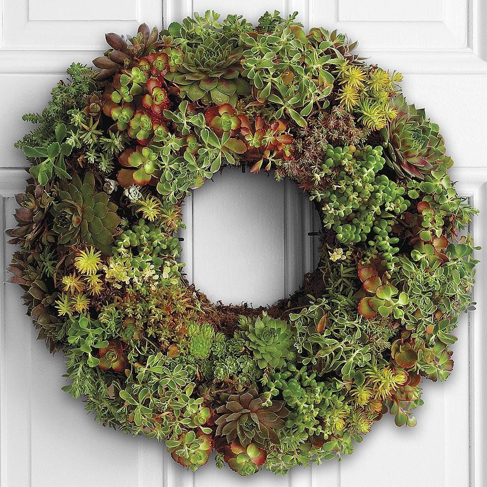 AmazonSmile : Living Succulent Wreath - 14 inches : Fresh Flower And Plant Wreathes : Grocery & Gourmet Food