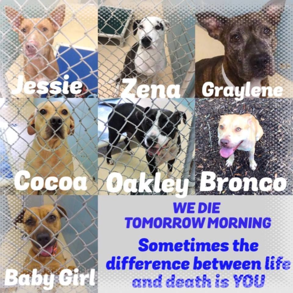 Code Red Urgent Last Call 7 Beautiful Dogs Need Your Help