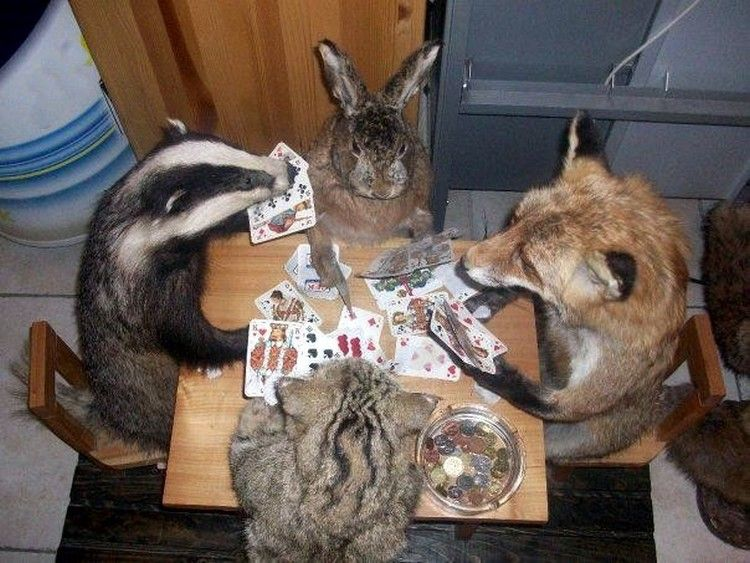 face poker games baboon