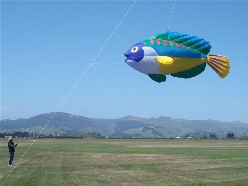 Giant Peacock Wrasse Line Laundry Inflatable Kite Christopher