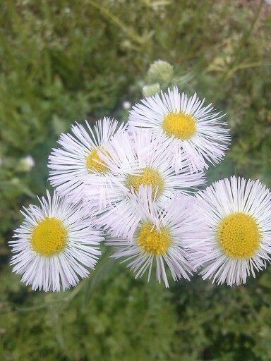 Me gustan estas flores