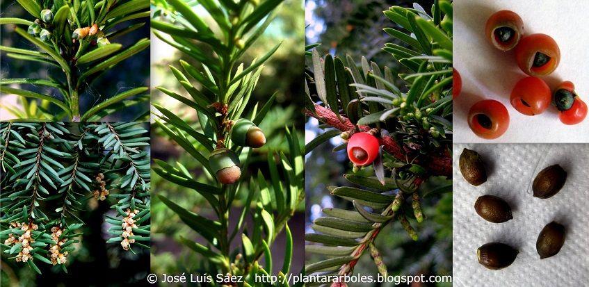 PLANTAR ÁRBOLES y arbustos MATEMÁTICAS Pinterest