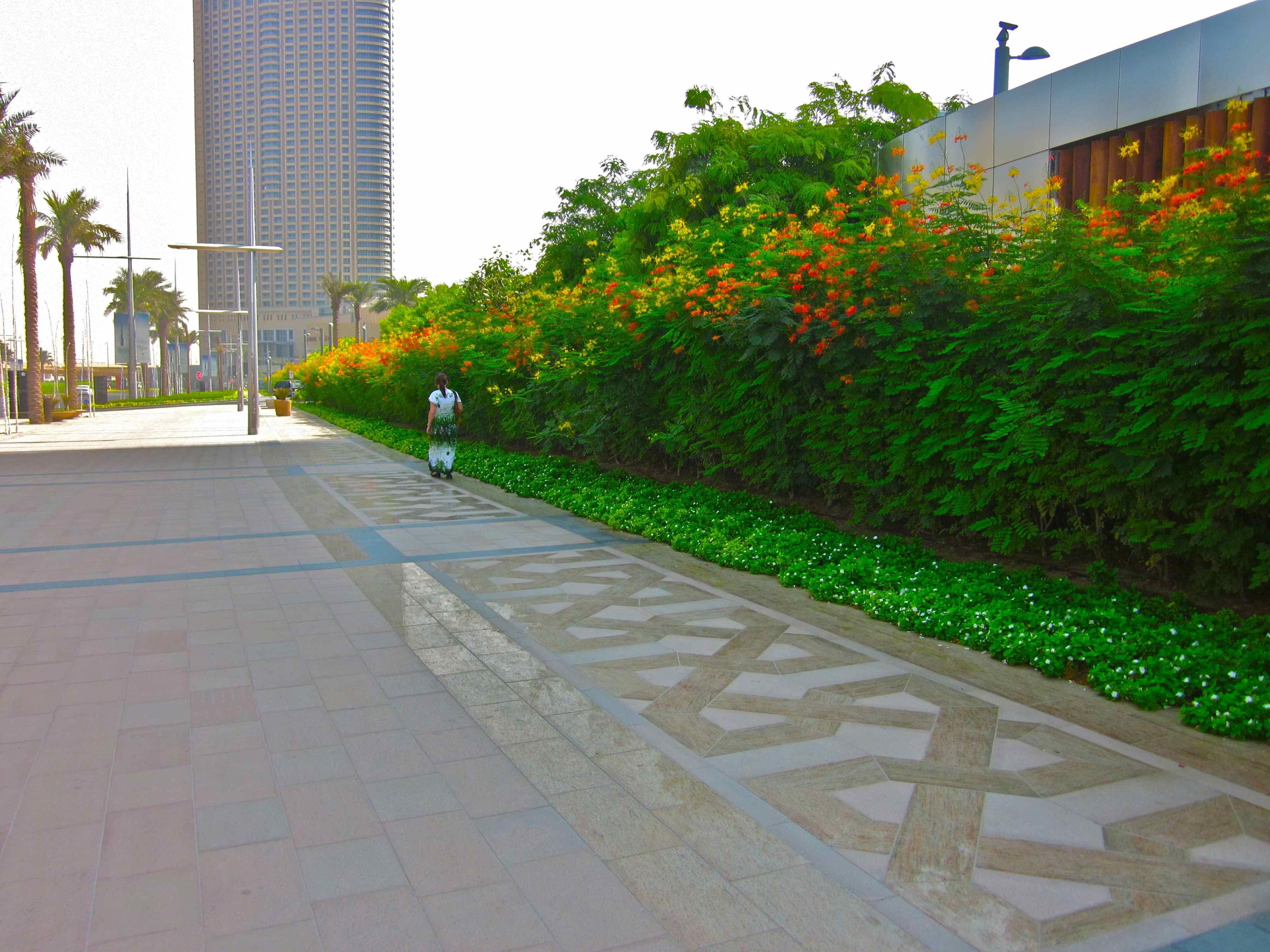 plants of kuwait - Google Search | Plants, Kuwait, Sidewalk