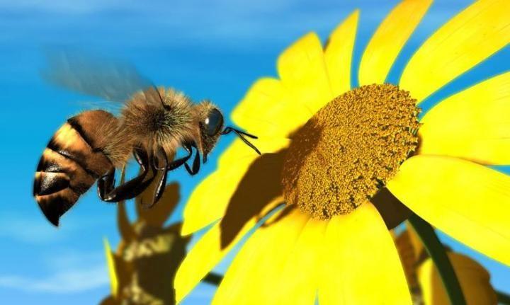 Λειτουργία Κέντρων Μελισσοκομίας | Υπογραφή Απόφασης | Αγροσύμβουλος Ο.Ε.