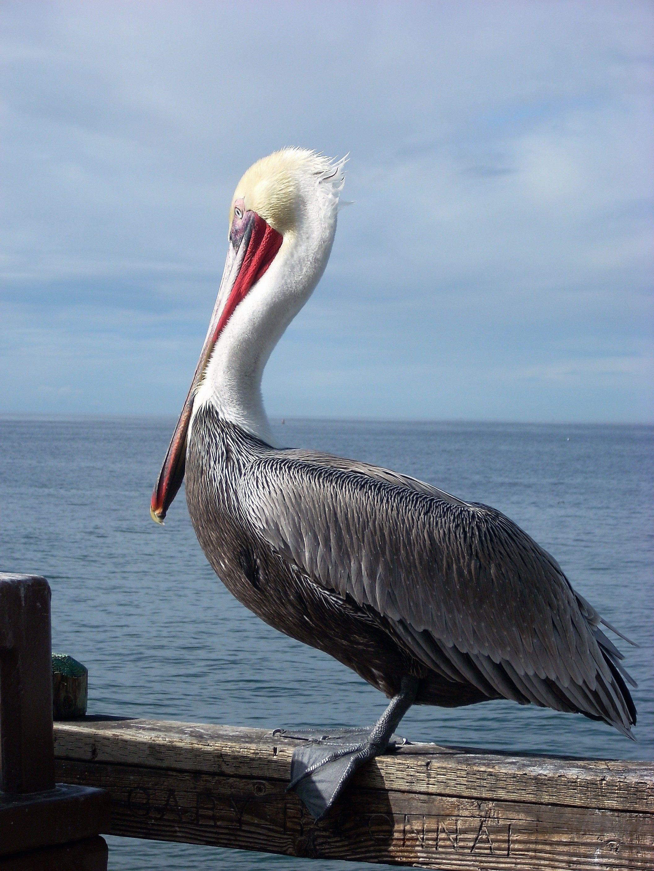 Best San Diego Birding Hotspots San diego beach