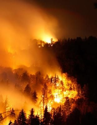 Feds Misguided Firefighting Efforts Wild Fire Wildland Fire Fire