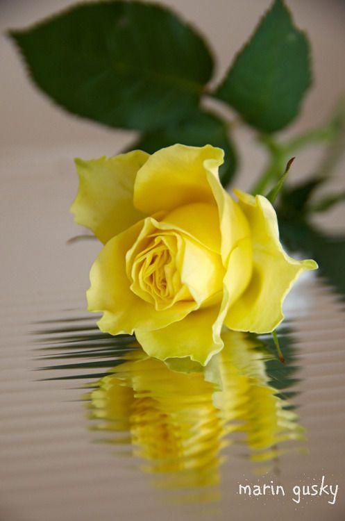 Pin De Leslie Kolkmann Em Flowers Rosas Amarelas Rosas Pretas Arranjos De Flores Tropicais