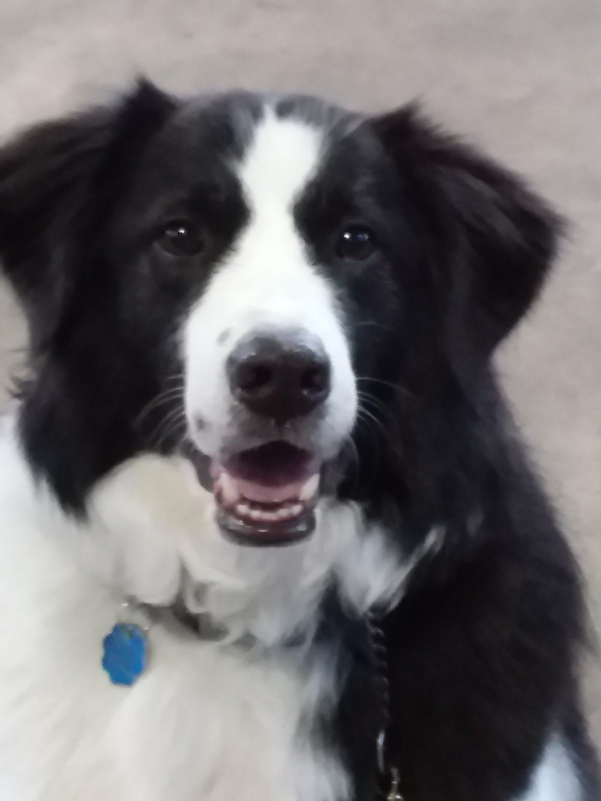 Shadow Bde Best Dog Ever Border Collie Pictures Collie
