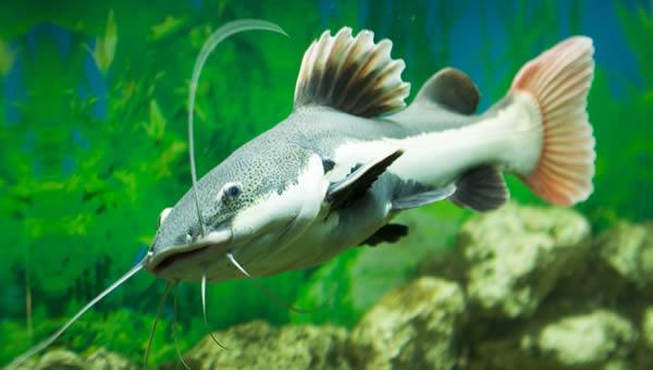 Rio amazon display recreates the primeval lush world of for Amazon aquarium fish