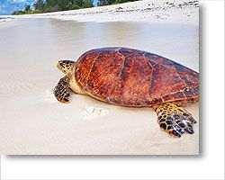 Ecolodges Seychelles, Green Hotels and Eco Resorts in Seychelles
