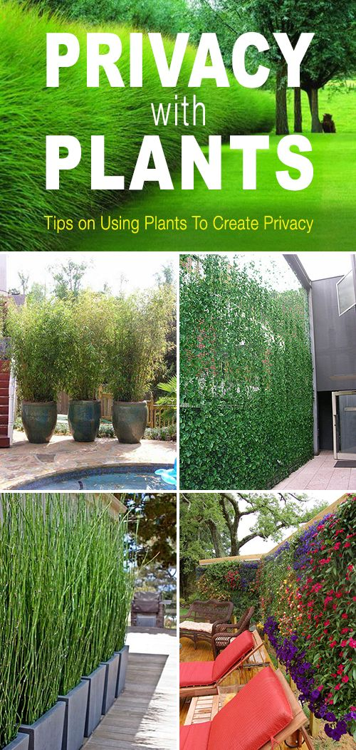 Privacy With Plants The Garden Glove Privacy Landscaping
