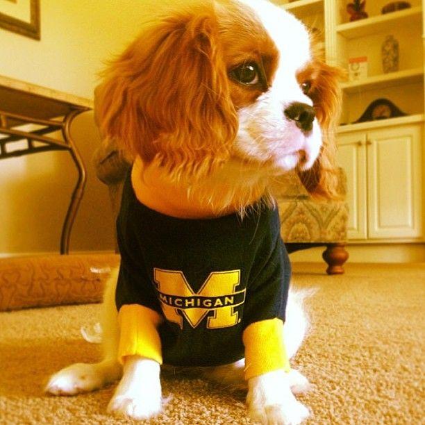 Phoebe is a proud Michigan puppy  | Michigan Spirit