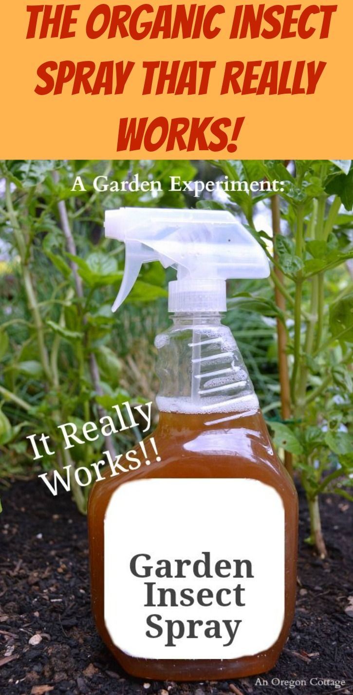A Diy Organic Garden Insect Spray That Works Garden Insects Insects And Sprays