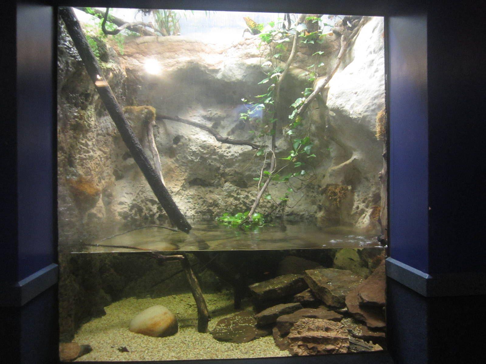 Newport aquarium nov mata mata turtle exhibit turtles