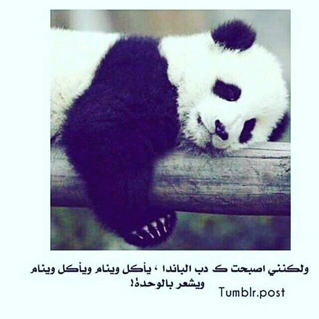 Pin By Melano Maryen On رمزيات وكذا Panda Bear Funny Pictures Bear