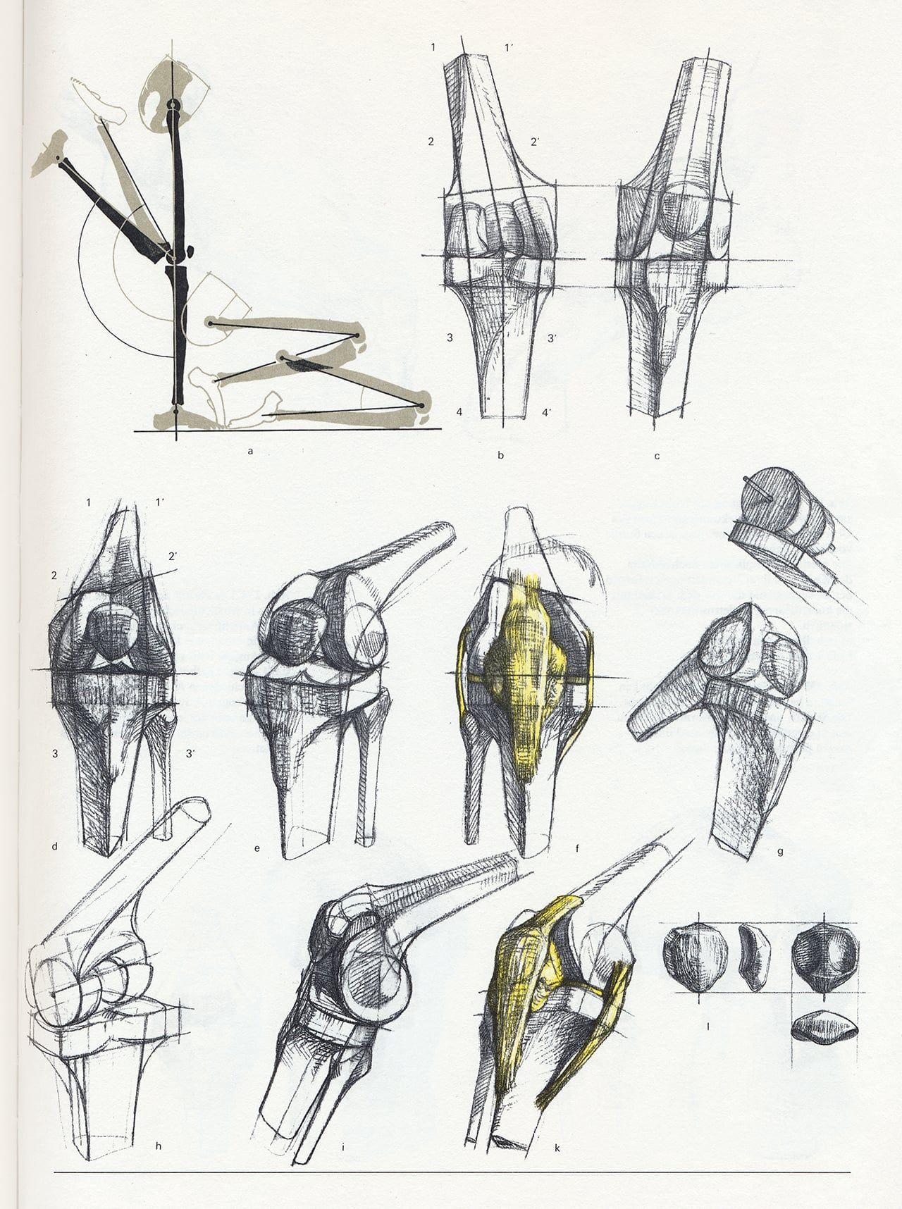 Anatomy - Bammes - Der nackte Mensch | Anatomy | Pinterest