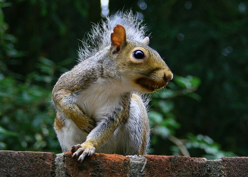 Angry squirrel by @Doug Wheller, via Flickr