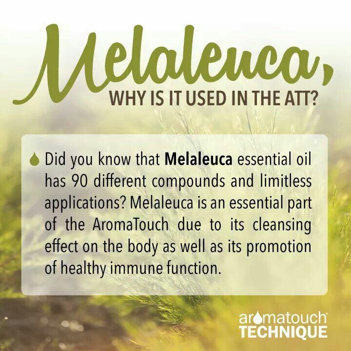 Melaleuca (AromaTouch Technique)   My doTerra Oils   Pinterest ...