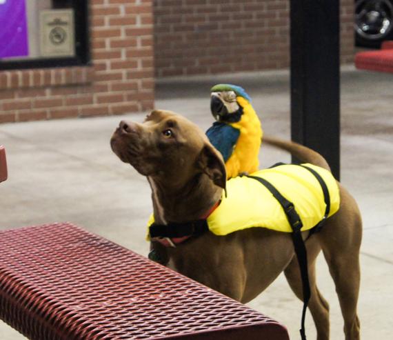 Dog and his Buddy