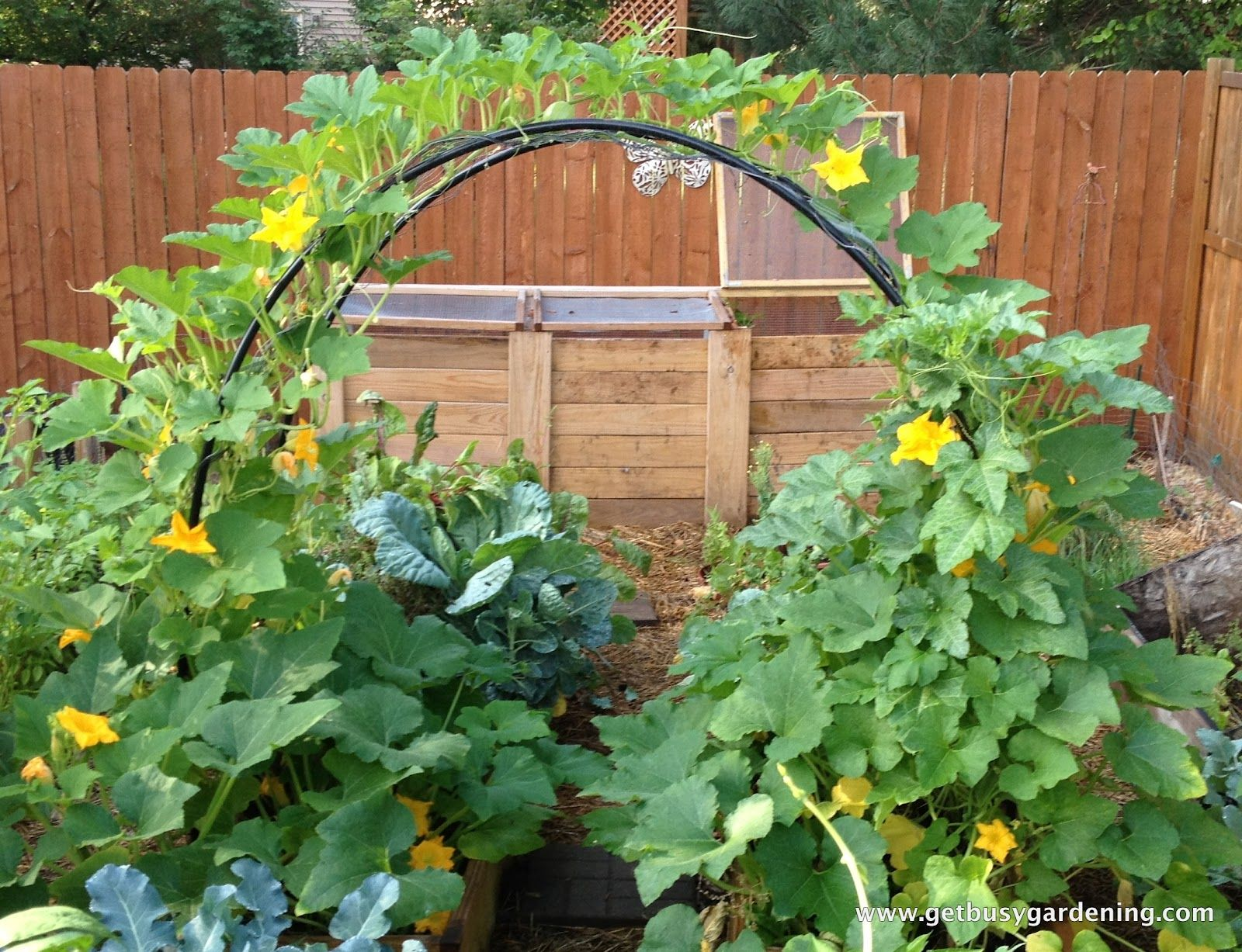 How to build a squash arch pvc paint space saver and for Vegetable garden pergola