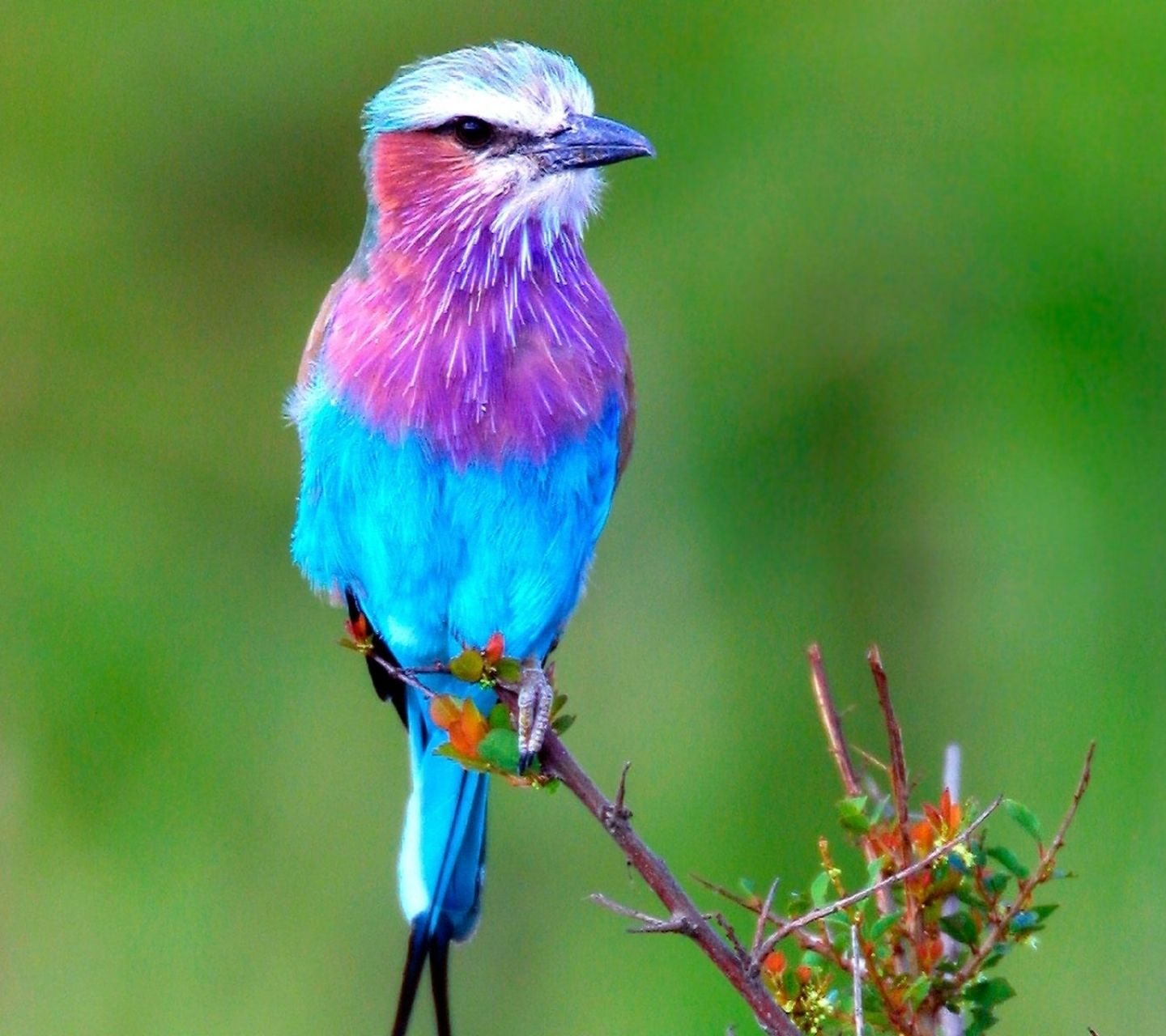 Download This Wallpaper Galaxy J2 Animal X2f Bird 1440x1280 For All Your Phones And Tablets Beautiful Bird Wallpaper Colorful Animals Beautiful Birds