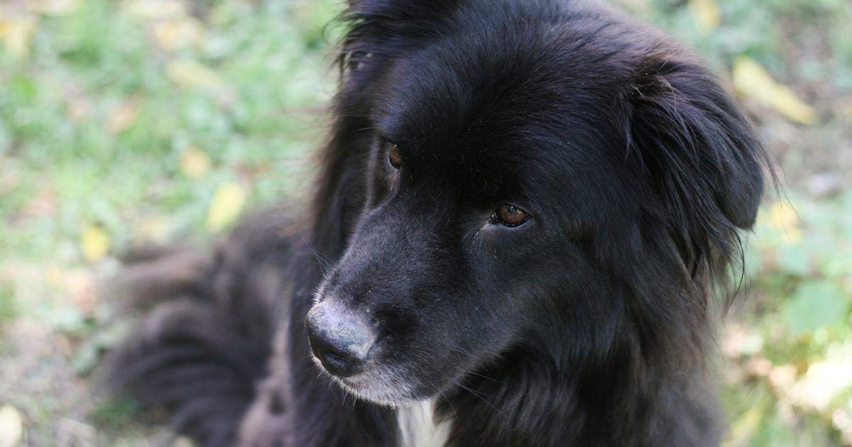 dieta casera para perros con insuficiencia renal cronica