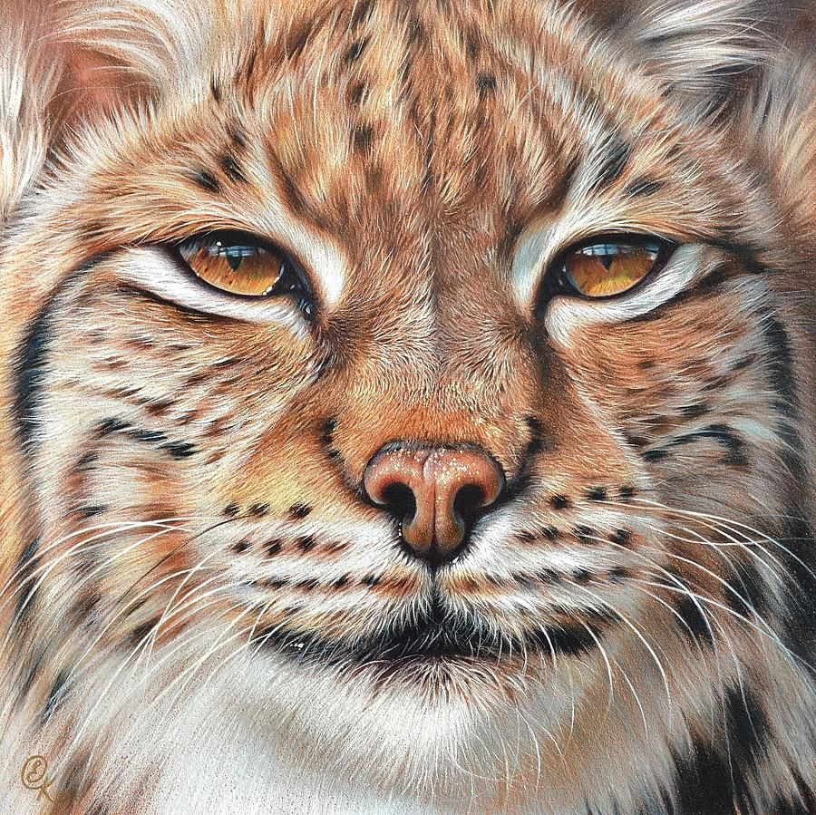 faces of the Wild Lynx Big cats art, Watercolor