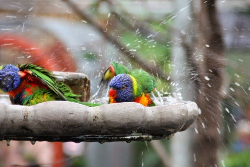 Jolinas Welt: Spaß mit Loris im Orchideen-Park im #Vogelbad #Loris #Papagei #bunt