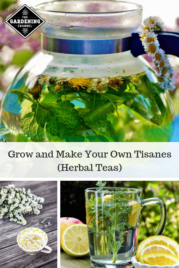 How to Grow and Make Your Own Tisanes (Herbal Teas (With