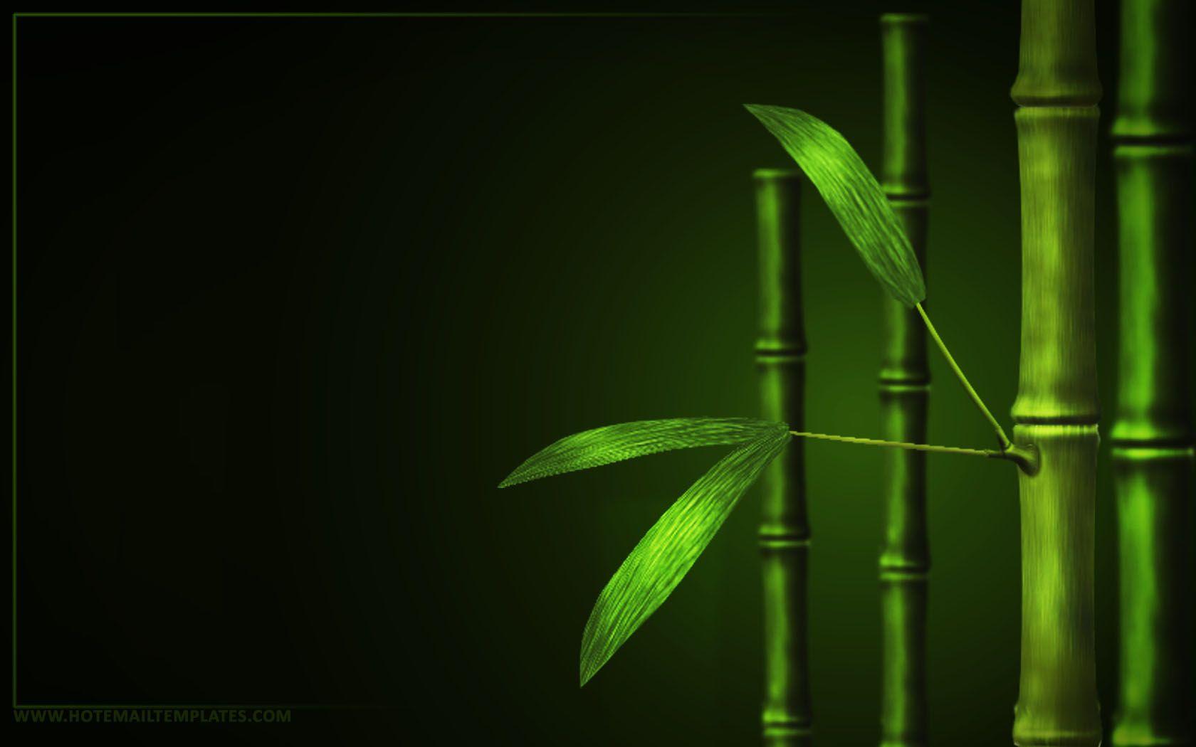 bamboo wallpaper hd wallpaper