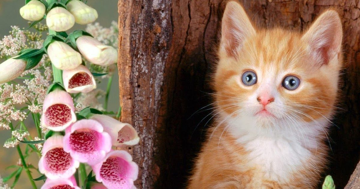 Cute Animal Wallpaper Hd For Mobile Cute Baby Cats Wallpapers Group 76 Pet Hd Cute Animal Wallpaper Hd For M In 2020 Cute Baby Cats Animal Wallpaper Baby Cats