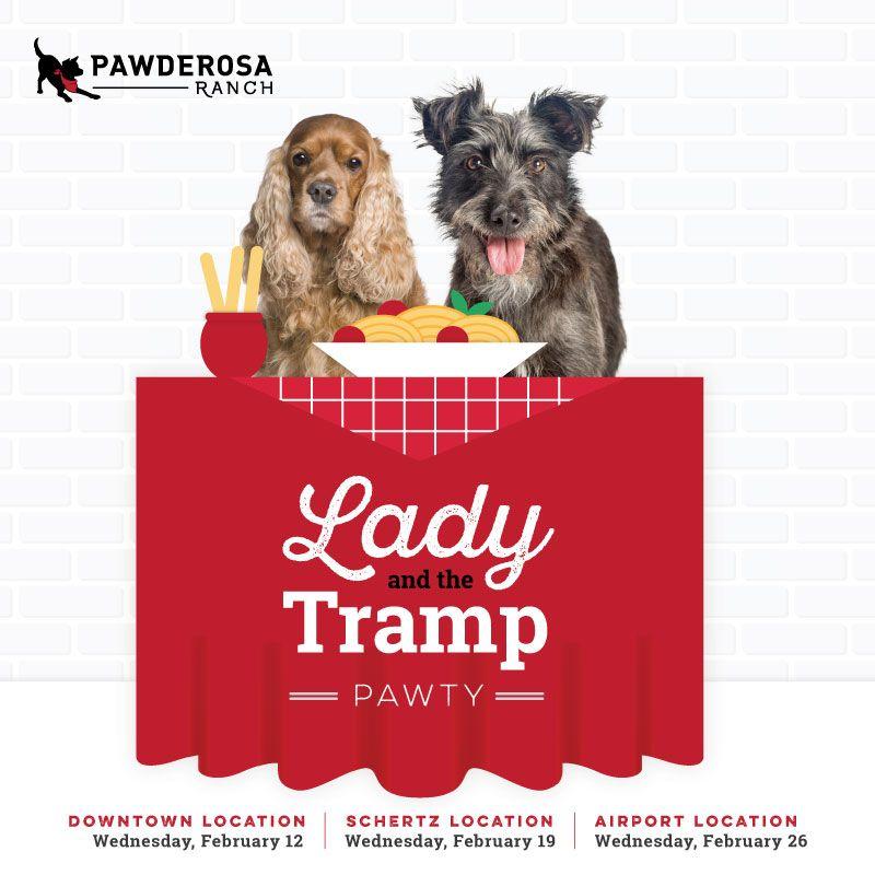 Dog Daycare Dog Boarding San Antonio Pawderosa Ranch In 2020 Dog Daycare Dog Friends Ranch