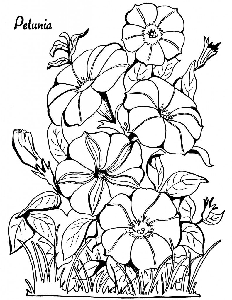 Flower growing coloring pages - Adult Coloring Page Petunias