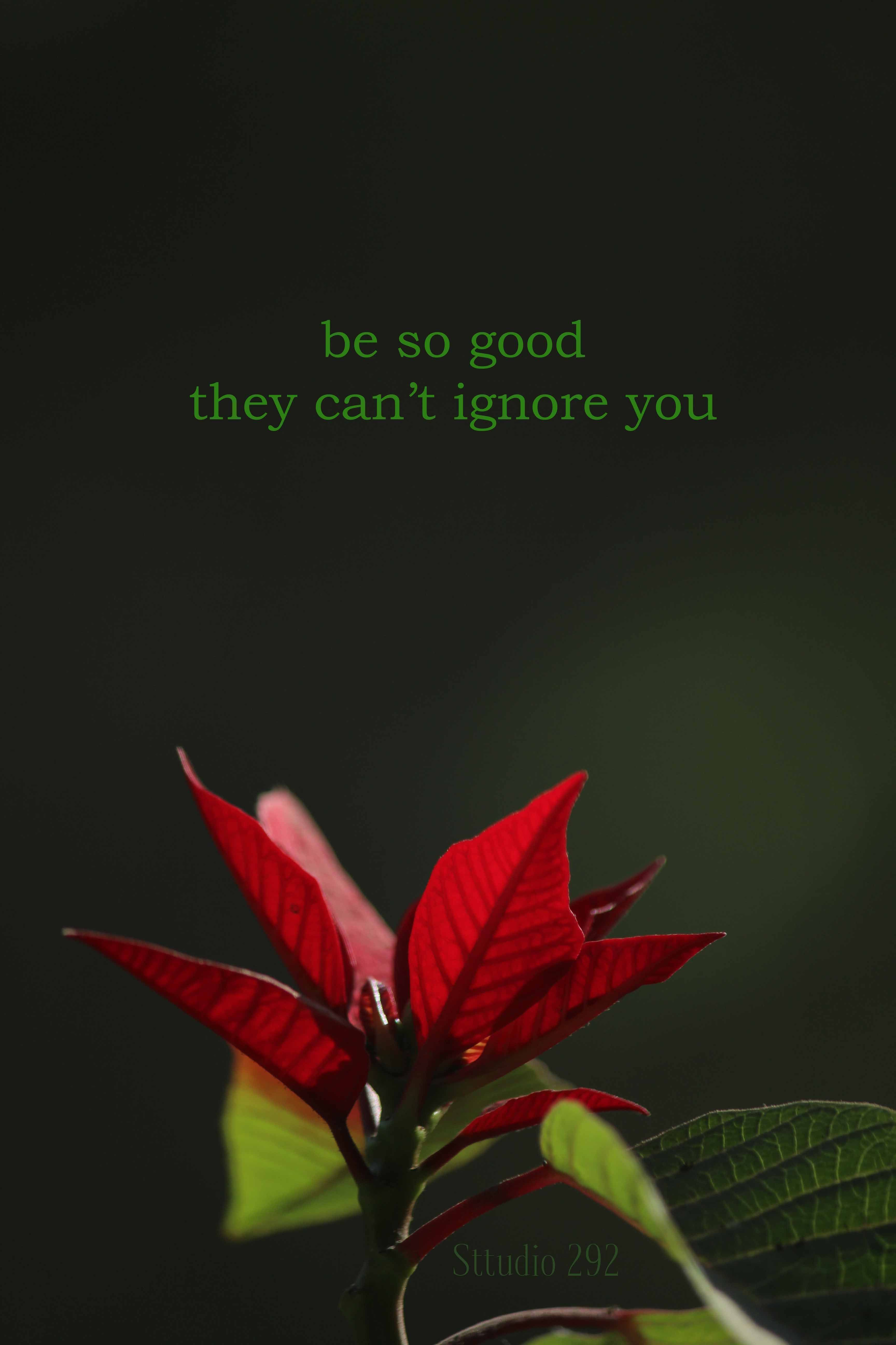 Poinsettia inspirational quotes for 2018 beautiful flowers poinsettia inspirational quotes for 2018 beautiful flowers beautiful flowers with quotes flower izmirmasajfo
