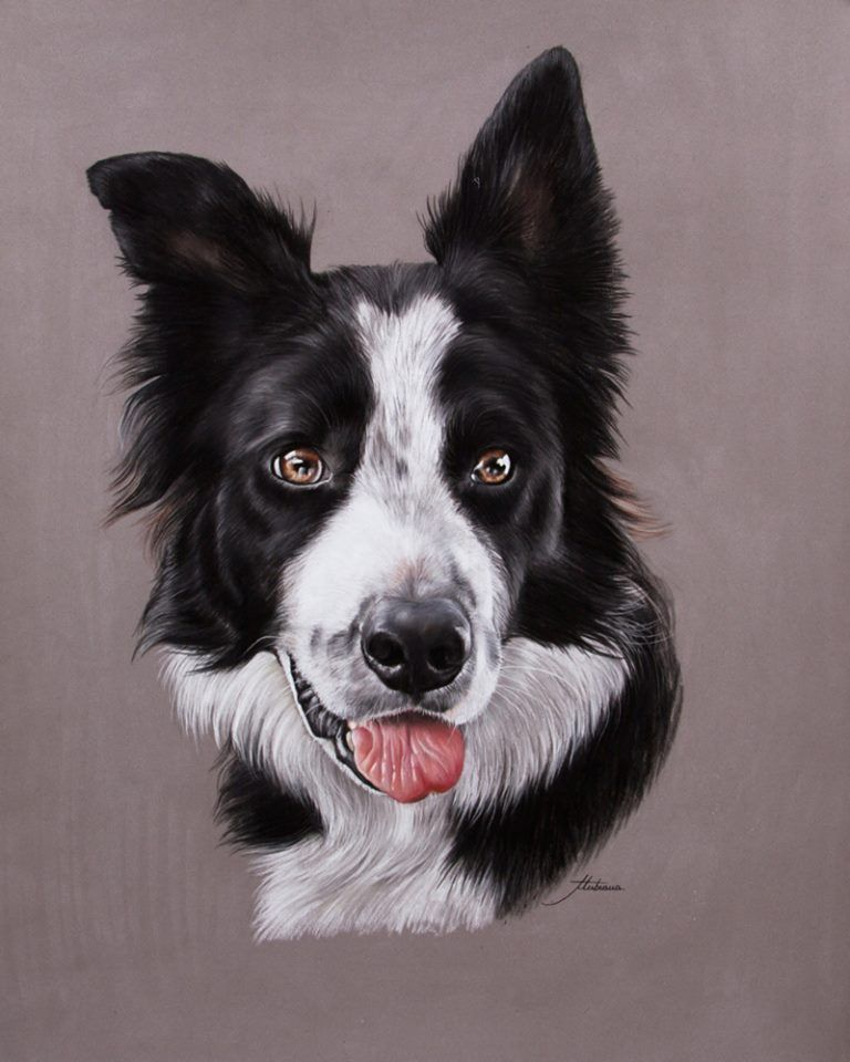 139 Tubiana Marion Pastels Et Photographies With Images Puppy Art Border Collie Art Animal Paintings